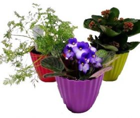 "4"" Flowering, Tropical or Herb Plant"